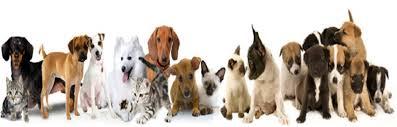 Barkers Pet Supplies, Lutterworth